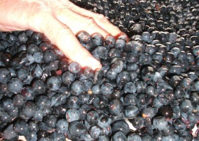 Contrôle du raisin